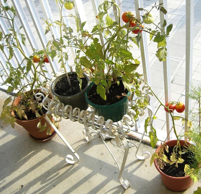plantas jardim pequeno:jardim-pequeno-criativo4